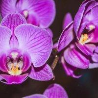 орхидея :: Оксана Fits
