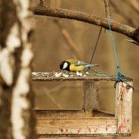 """из серии """"Must have"""" для фотографа:) :: Дарья Казбанова"""