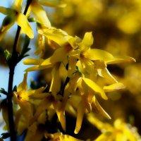 Наконец-то весна :: Валерий Живило