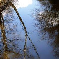 В гостях у озера лесного :: Валерий Розенталь