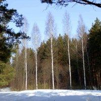 Краса леса. :: Мила Бовкун