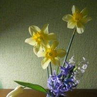 Весенний букет :: Галина