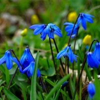 Весны цветение.... :: владимир