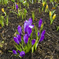 Весна :: Падонагъ MAX