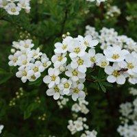 А у Весны цветенья аромат... :: Galina Dzubina