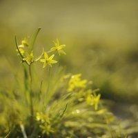 Цветы в вечерних солнечных лучах :: Иван Лазаренко