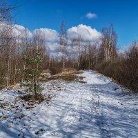 Весенняя дорога 2 :: Андрей Дворников