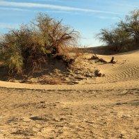 дюны :: svabboy photo