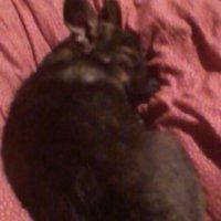 Пушык спит как зайка маленький... :: Тоня Просова