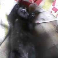 Цеган релаксирует, спит на кровать догори животиком и лапками... :: Тоня Просова