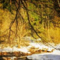 Весна :: Екатерррина Полунина