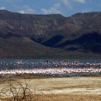 Озеро Баринго (Кения) :: Irina Shtukmaster