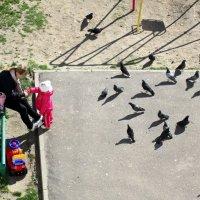 Покормим птичек! :: Татьяна Смоляниченко