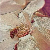 Пчела :: Сергей Форос