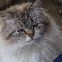 грустный котик :: Сергей