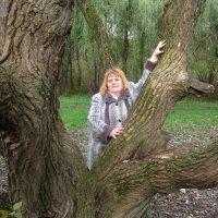 У старинного дерева в парке :: Елена Семигина