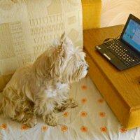 Даёшь всеобщую компьютерную грамотность!  :) :: Андрей K.