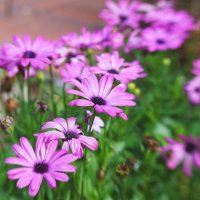 Цветы-цветочки :: Татьяна Манн