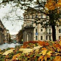 на ковре из желтых листьев... :: Игорь Свет