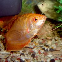 Опечалилась рыбка...! :: Наталья