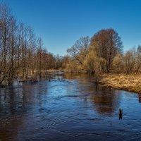 Река Дрезна разлил начинается 2 :: Андрей Дворников