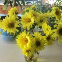 Цветы на окне :: татьяна