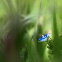 мАленький  цветочек.. :: Natali D