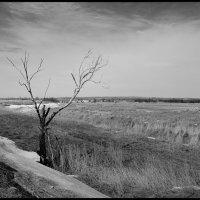Пейзаж с обгоревшим деревом :: Михаил Онипенко