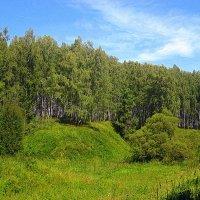 Летняя прогулка в лес. :: оля san-alondra