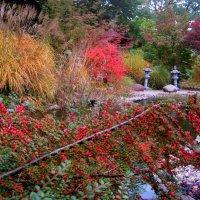 Осенние краски в декоративном саду :: spm62 Baiakhcheva Svetlana