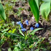 В моём саду апрель... :: Михаил Болдырев
