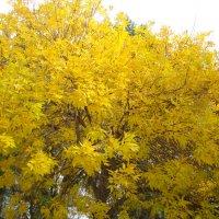 Хочется ярких красок...или золотое дерево... :: марина ковшова