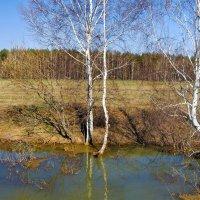 Лесной завидуя судьбе... :: Лесо-Вед (Баранов)