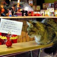 Кошка!!! :: Падонагъ MAX