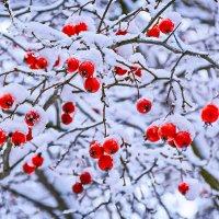 Зимняя свежесть...(Прошедшая) :: Александр Кудров