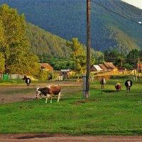 Вечернее село :: Сергей Чиняев