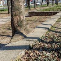 Дерево устало и село отдохнуть :: Владимир KVN