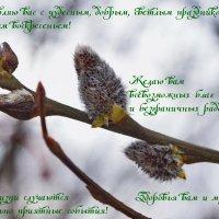 С Вербным Воскресеньем! :: Татьяна Помогалова