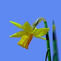 Весна по фото Павел Руденко :: Владимир Хатмулин
