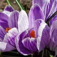И вновь цветы :: Tatjana