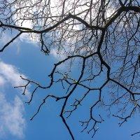 Ветвь обнимает небосклон :: Валерий Розенталь