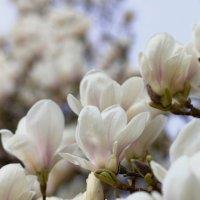 весна... :: Ирина ...............