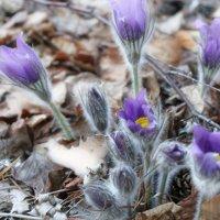 Весны улыбка :: liudmila drake
