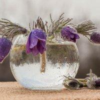 Первые цветы :: Елена Ахромеева