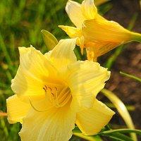 городские цветы-лилии :: Олег Лукьянов