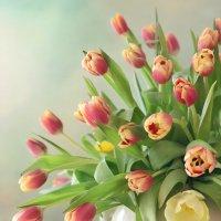 Тюльпаны :: Оксана Чегол