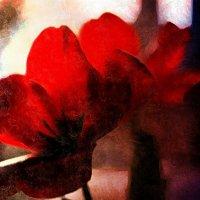 Красные  цветы :: Ирина Сивовол