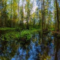 Половодье в весеннем лесу. :: Фёдор. Лашков