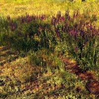 Травы :: Татьяна Королёва