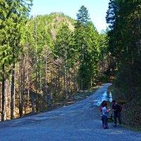 На перепутье...Альпийская Бавария! :: Galina Dzubina